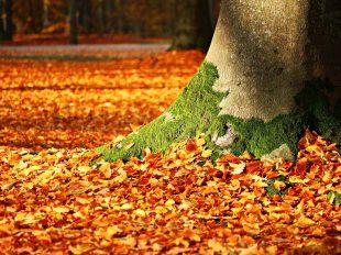 Limpieza de jardín - aspirador soplador hojas