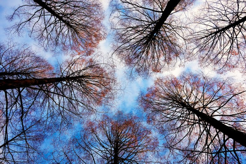 poda-árboles-invierno