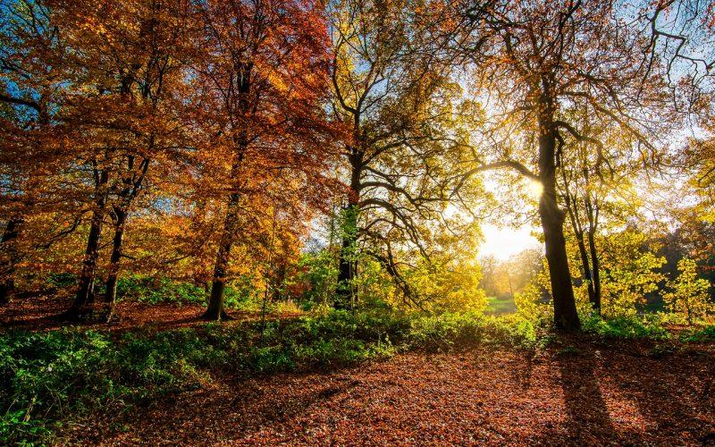 Recogida de hojas otoño