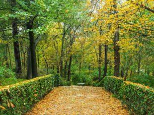 Consejos en otoño con maquinaria jardinería y herramientas