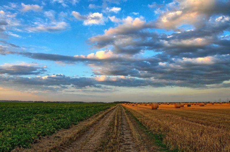 Consejos para mantener la maquinaria agrícola y de jardinería