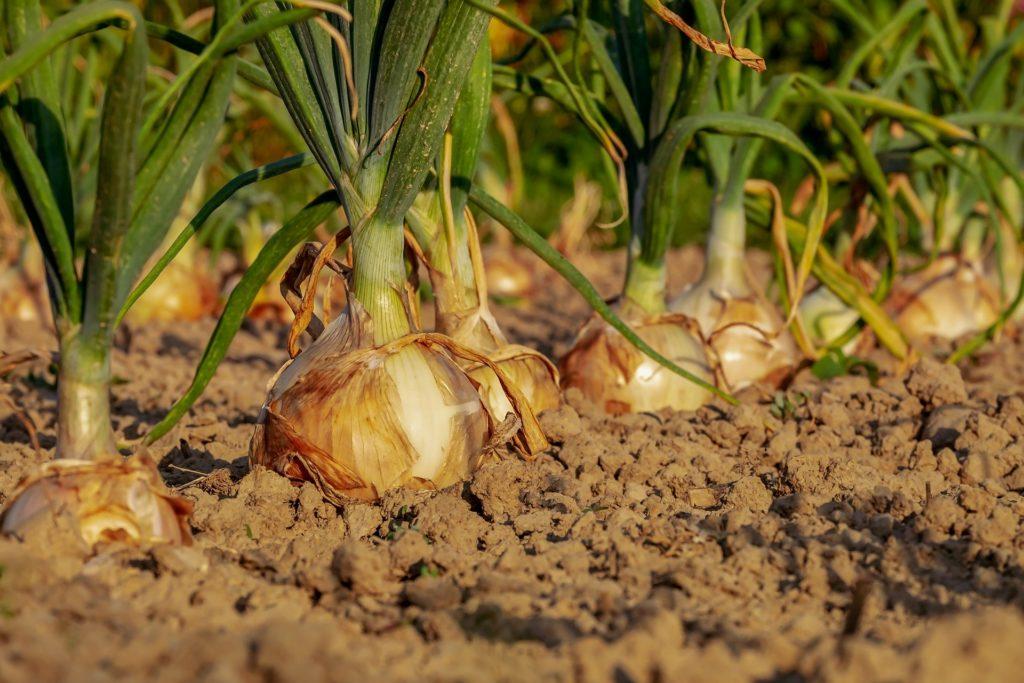 prepara la tierra para sembrar